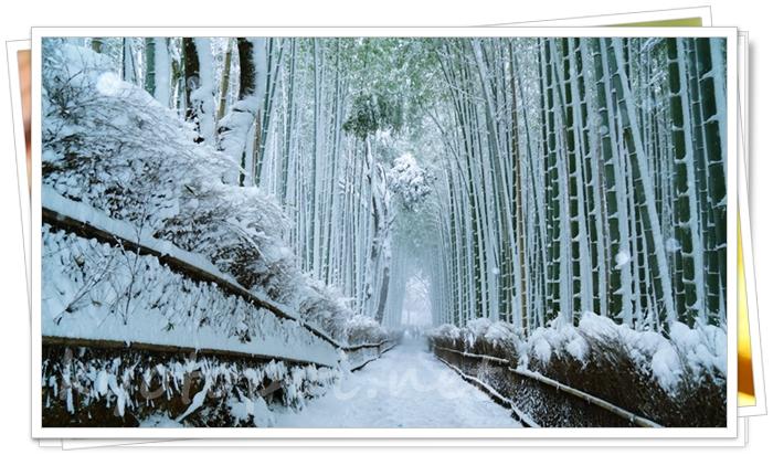 嵐山の竹林(冬の雪景色)
