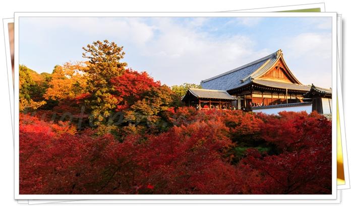 京都 東福寺のお堂と紅葉