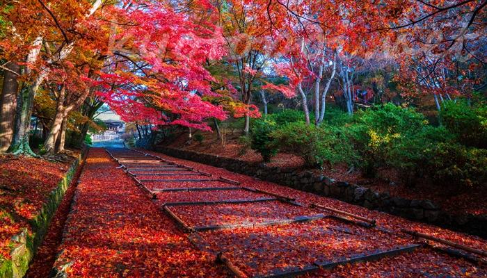 京都市山科区 毘沙門堂の散り紅葉(敷きもみじ)