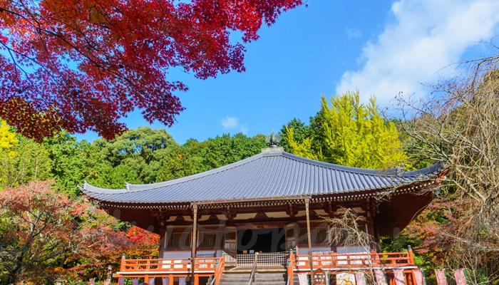 京都の醍醐寺の紅葉