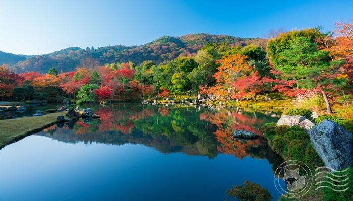 天龍寺の紅葉の季節の見どころ 曹源池庭園