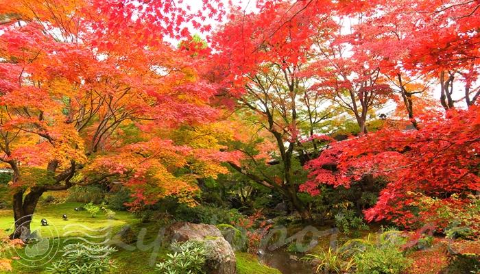 宝厳院の獅子吼の庭 秋の紅葉 昼間の場合