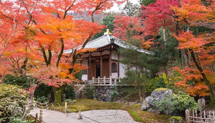 秋 紅葉の宝厳院