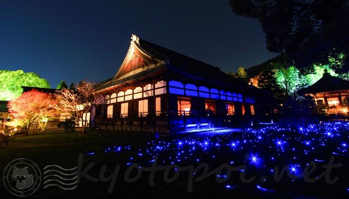 青蓮院門跡の夜間ライトアップが神秘的