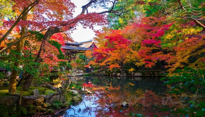 南禅寺 天授庵の庭園の紅葉
