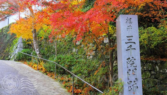 京都 大原の三千院の紅葉シーズンはいつ?