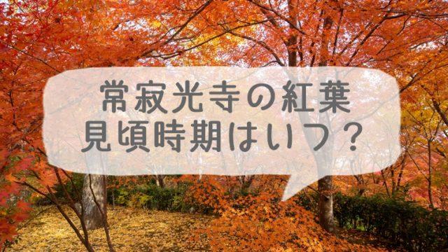 常寂光寺の紅葉の見頃時期はいつ?
