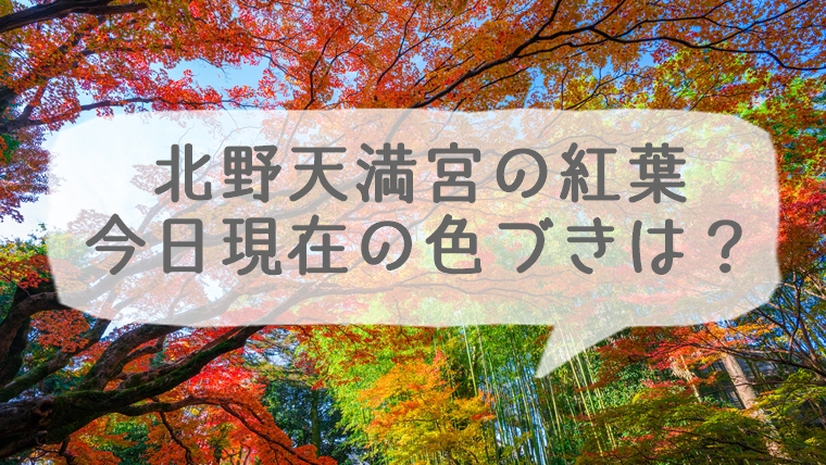 北野天満宮の紅葉 今日現在の色づきは?