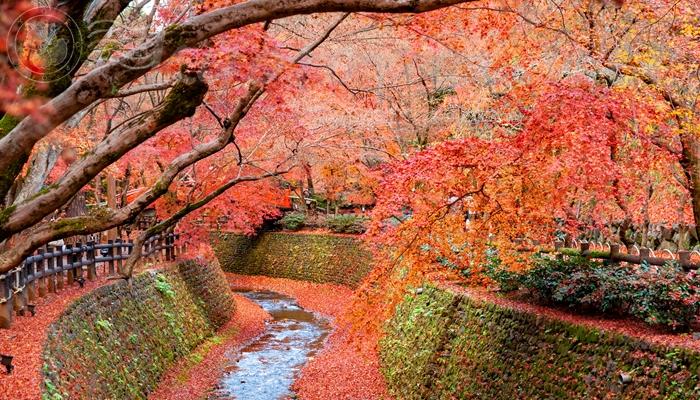 北野天満宮 紙屋川の紅葉