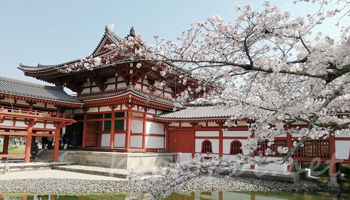 京都の世界遺産 宇治の平等院鳳凰堂
