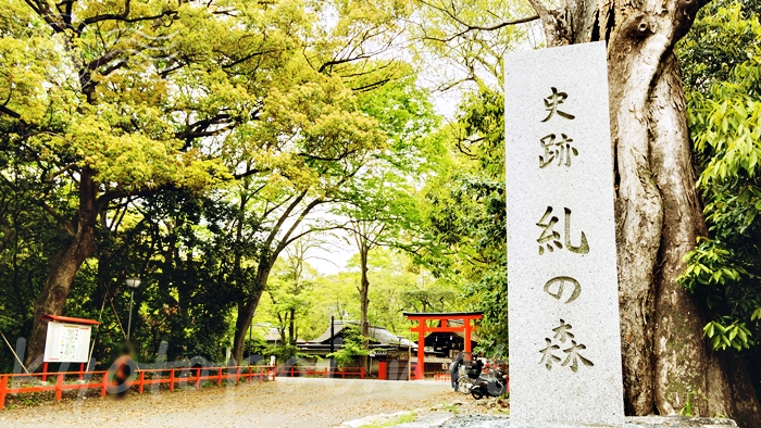京都の世界遺産 下鴨神社(賀茂御祖神社)の糺の森