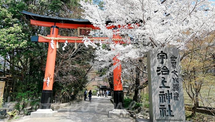 京都の世界遺産 宇治上神社の鳥居