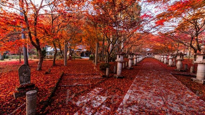 京都の世界遺産 高山寺の紅葉