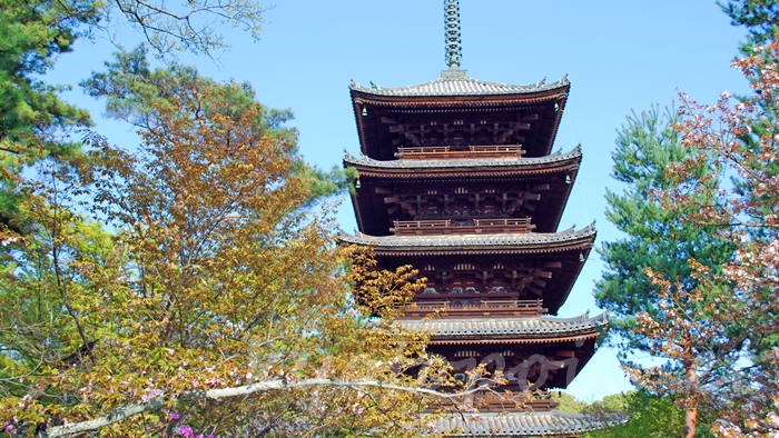 京都の世界遺産 仁和寺の五重塔