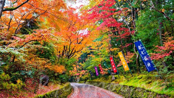 赤山禅院 紅葉のトンネル